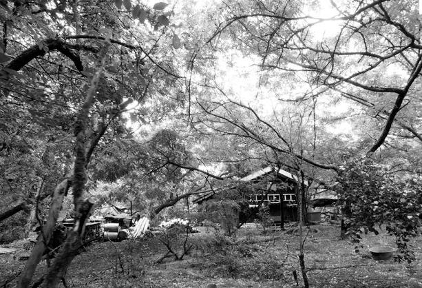 2:23-Forêt usagère