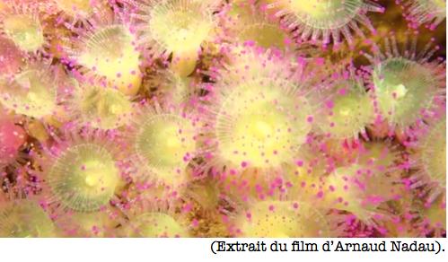 8-anemones